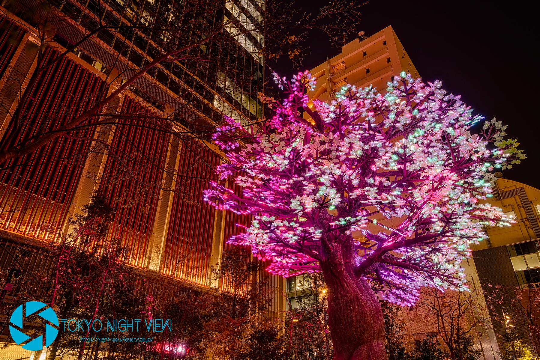 The Tree of Light -灯桜(ともしざくら)-