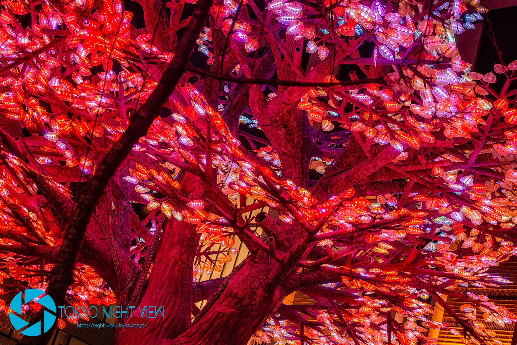 日本橋の夜を彩る電子の桜