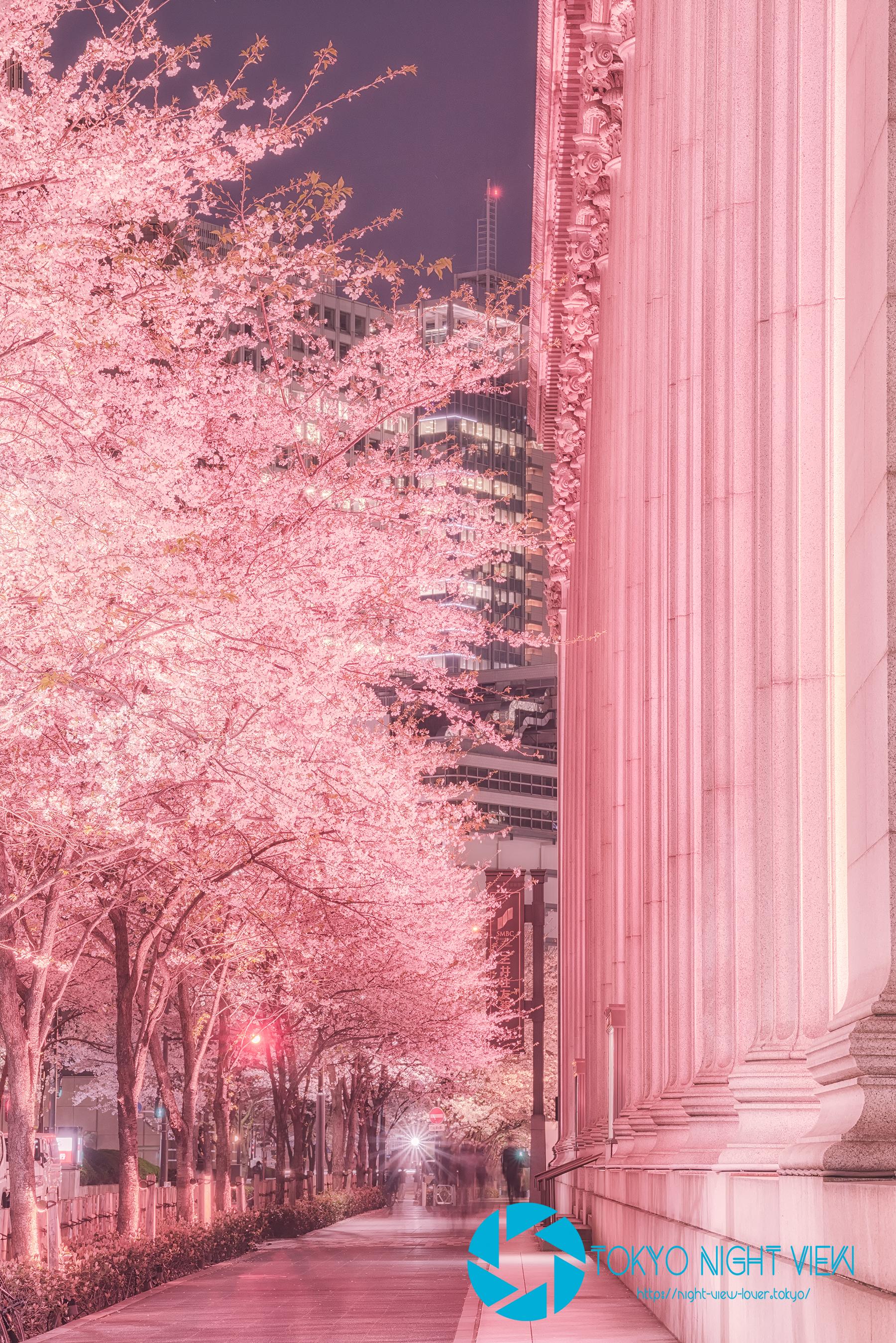 特徴的な柱が並ぶ三井本館と桜並木
