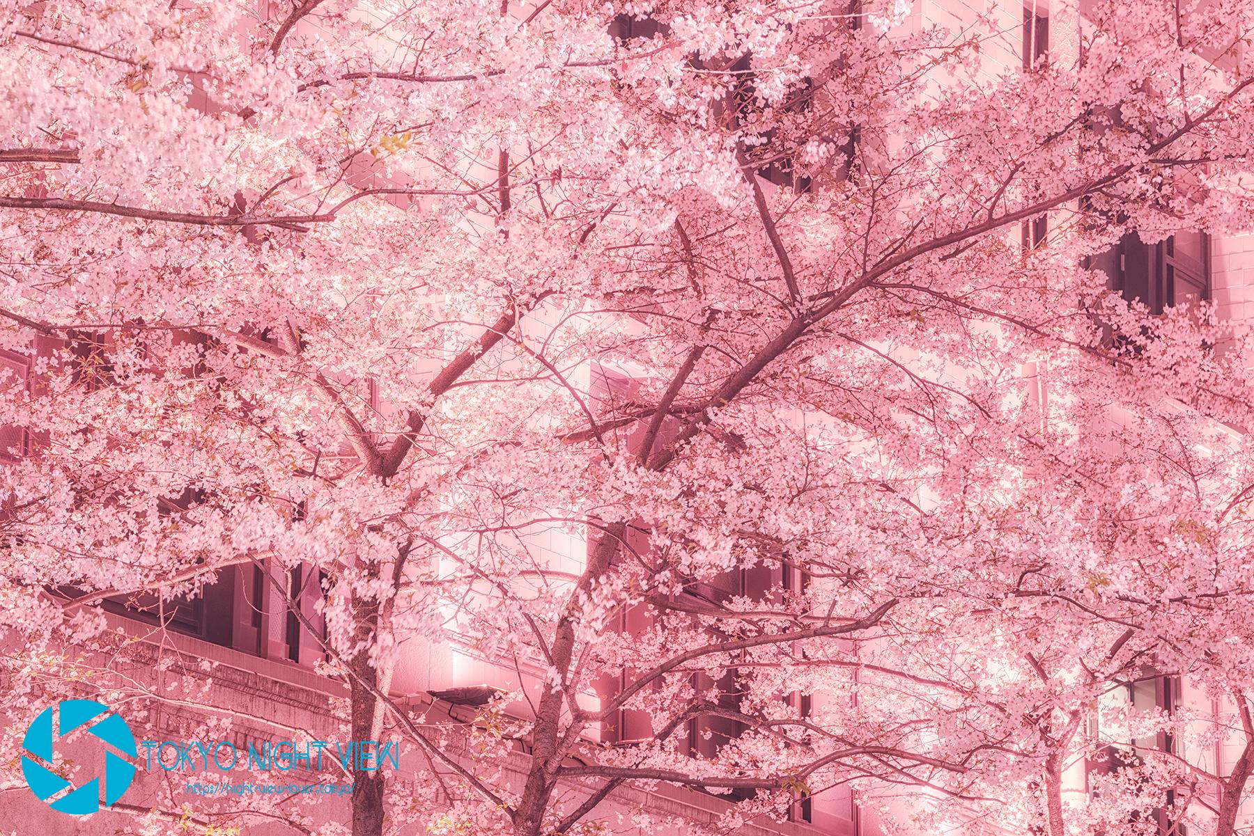 ピンク色の照明のお蔭で最後まで桜色