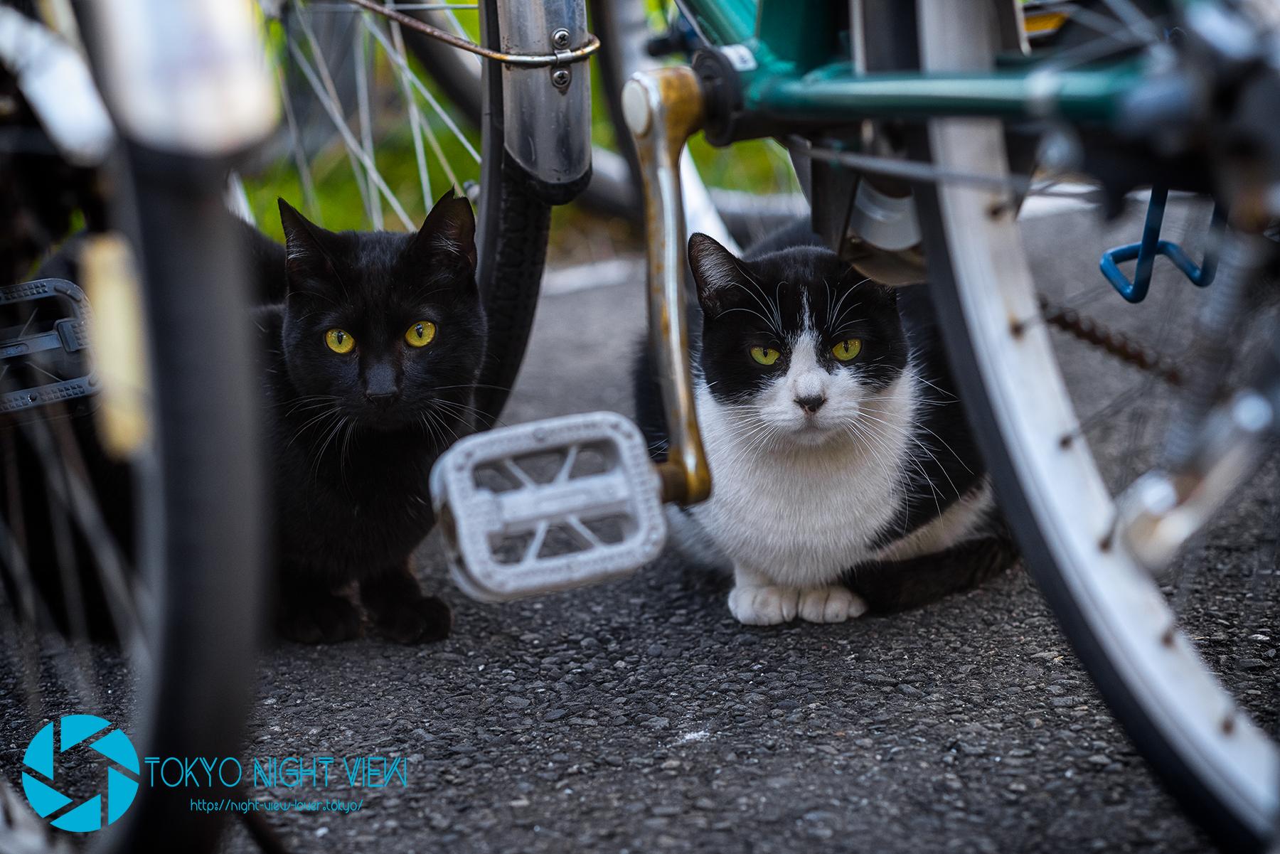 Tsurumi Line Alley Cat