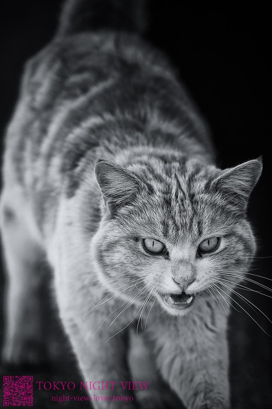 猫風景-Cat landscape
